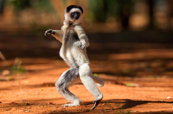 lemur-run2_1745019i